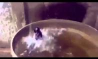Kaip maudosi durnavota katė