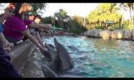 Piktasis delfinas