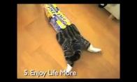 Dienos LOL'as: Ko šiais metais mus išmokys katės