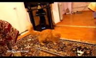 Katė prieš Super Mario
