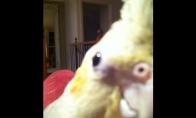 Dienos LOL'as: Paukštis, geresnis už Skrillex'ą
