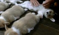Šunadieniški vaizdeliai su šunimis (3 video)