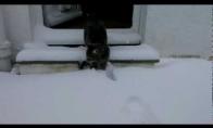 Katė pirmą kartą pamato sniegą