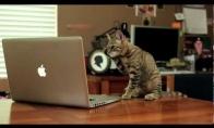 Katinas džedajus