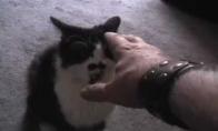 Kaip reikia auklėti katinus