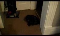 Dienos LOL'as: Išauklėtas katinas