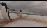 Pingvinų sankryža