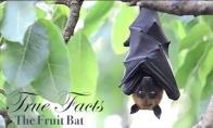 Tikri faktai apie šikšnosparnius