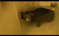Povandeninė katė