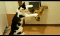 Katės yra zapadlistės