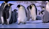 Trečiadienio pingviniški feilai