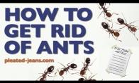 Kaip atsikratyti skruzdžių