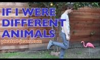 Jeigu aš būčiau gyvūnas