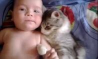Katė myli kūdikį