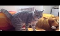 Katinas nindzė