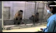 Bezdžioniška nelygybė
