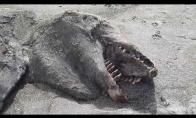 Naujojoje Zelandijoje rastas jūros monstras