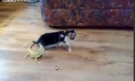 Kaip godzilos kačiuką duxino...