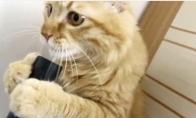 Katino ir dulkių siurblio meilė