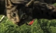 Katinasparnis