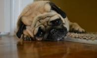 Depresuojančio šuns dienoraštis