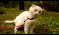 WTF Katinas [Klasika]