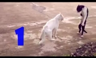 Funny Cats Compilation №1