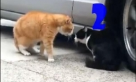 Funny Cats Compilation №2