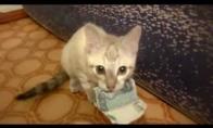 Gobšuolis katinėlis