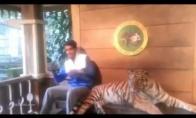 Pozuojančio tigro geriau neerzinti