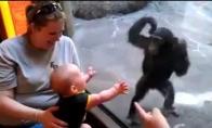 King-Kongas prieš mažąjį Chuck'ą