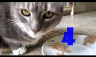 Funny Cats Compilation #4