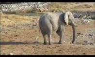 Šuo vs dramblys