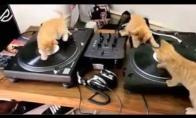 Dj katiniesto, Armin van kycka ir David katieta