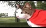 Super-katinas gelbsti katiną