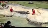 Nekišk galvos į krokodilo nasrus!