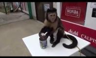 Beždžionėlė - proto bokštas