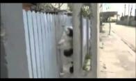 Šuo akrobatas!