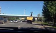 Milžiniškas briedis šturmuoja viaduką
