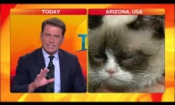 Interviu su Grumpy Cat
