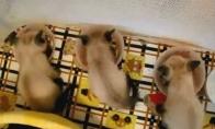 Nom-Nom-Nom kačių rinkinukas