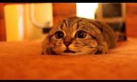 Mieliausias apsinešęs katinėlis