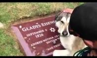 Šuo verkia ant šeimininko kapo