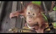 Mieliausias beždžioniukas pasaulyje