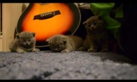 Kaip užmigdyti iš karto 3 kačiukus