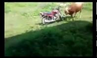 Užvedantis mopedas