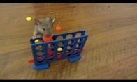 Pelė fokusininkė