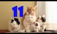 Funny Cats Compilation #11