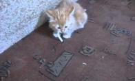 Apsirūkiusi katė negali mesti žalingo įpročio