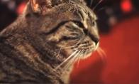Juokingiausių katinų rinkinukas